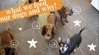 What I feed my dogs and why | Dachshunds in the UK
