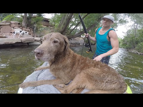 Old Dog gets a Floating Bed to Go Fishing