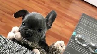 Смешные коты и собаки Милые щенки и котята Приколы с животными Калейдоскоп за 22 09 2018