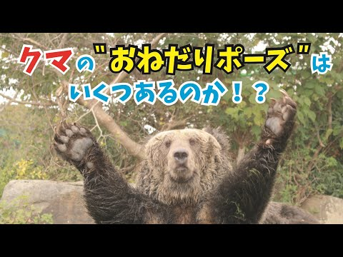 """【衝撃映像】クマの""""おねだりポーズ""""はいくつあるのか!?"""