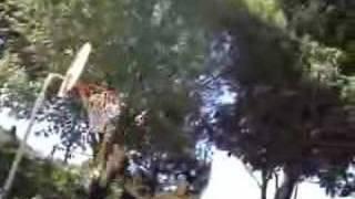 Basket schiacciate e cazzate(anti-flag i don't believe)
