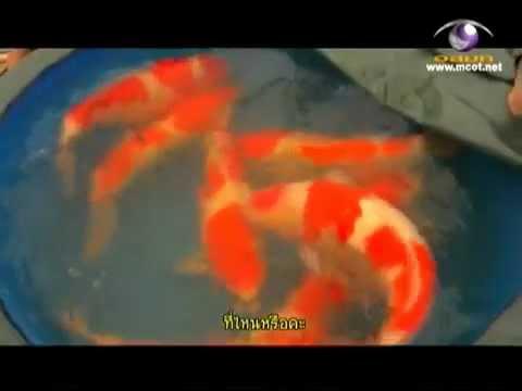 หนอนอันตรายต่อปลาชนิดเกลือ