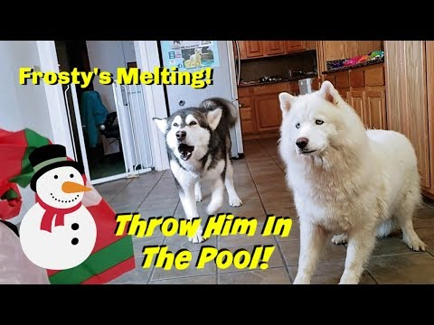 My Dogs Freak Out Over Melting Frosty