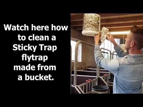 Video of cleaning a bucket with flies