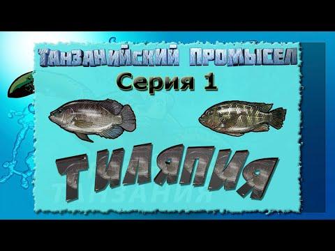 Русская Рыбалка 3.99 (Russian Fishing) Танзанийский промысел 1 - Тиляпия