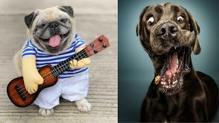 Funny And Cutest Dogs Compilation   Funny Dogs!!