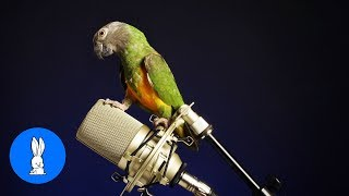 Funny BIRDS & PARROTS Talking and Singing