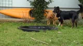 preview picture of video 'Josies Ordnungsdrang | Leihfrauchen - Julia Weber, Tierbetreuung mit Herz'
