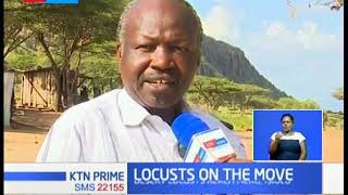 Locust menace now moves to Meru, Isiolo counties; Gov't says no course for alarm
