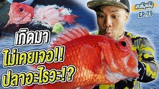 ล่าปลาทะเลไทย เกิดมาไม่เคยเจอ!!! [หัวครัวทัวร์ริ่ง] EP.79