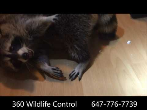 360 Wildlife Control Inc | Pest & Animal Control in Vaughan
