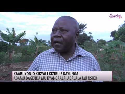 Abatuuze e Kayunga boolekedde okulumbibwa endadde lwa butaba na kabuyonjo.