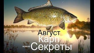 Рыбалка на карпа в августе