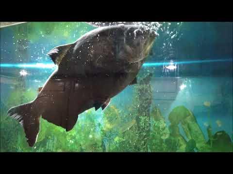 Jawahar Aquariums Mussoorie