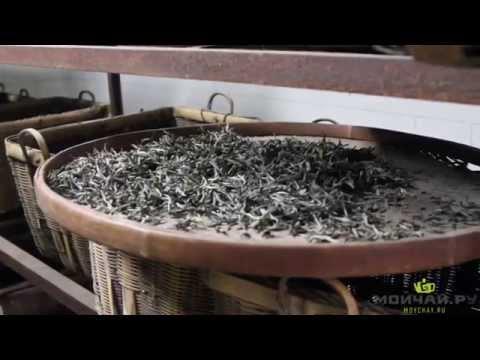 Путешествие за белым чаем. Чжэнхэ Zhenghe онлайн видео