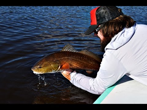 Everglades Redfish on Fly (Winter Lows)