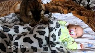 Смотреть онлайн Кошка усыпила младенца
