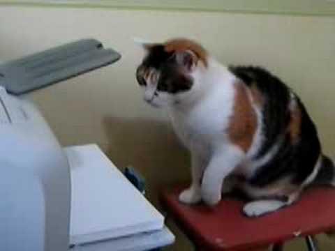 Mèo vs máy in  xem nhanh từ 0:20