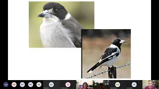 Final findings focused on woodlands birds and species