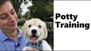 Golden Retriever Potty Training from world-famous dog trainer Zak George – Golden Retriever Puppies