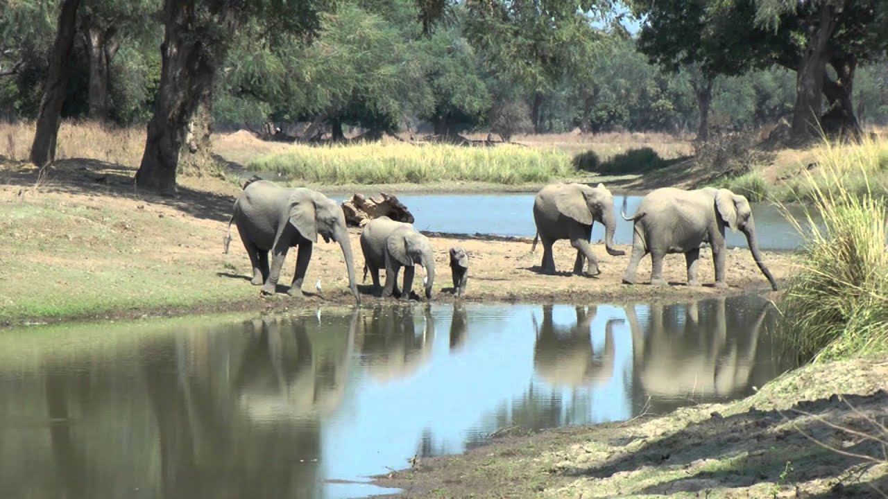 EPIC AFRICA: Zimbabwe Safari Highlights