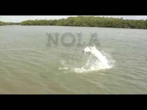 Fly Fishing: Florida Tarpon