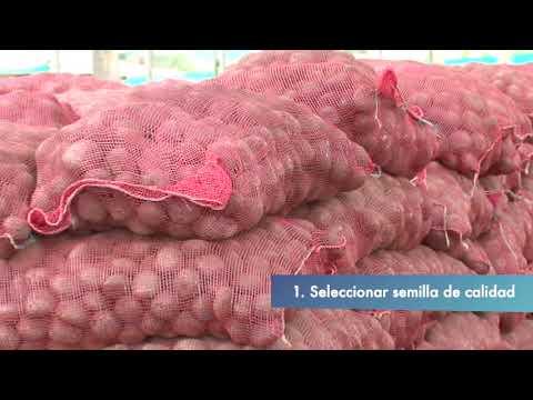 Papilloma virus rischi in gravidanza
