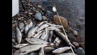Рыбалка в хакасии на енисее