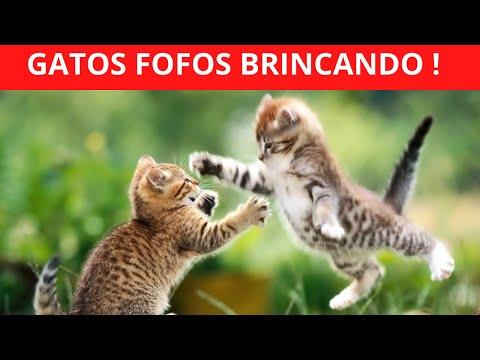 GATOS  FOFOS BRINCANDO | GATOS