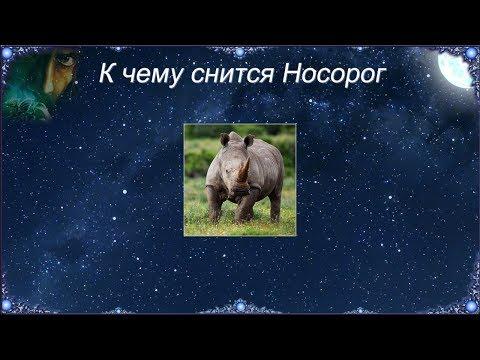 К чему снится Носорог (Сонник)