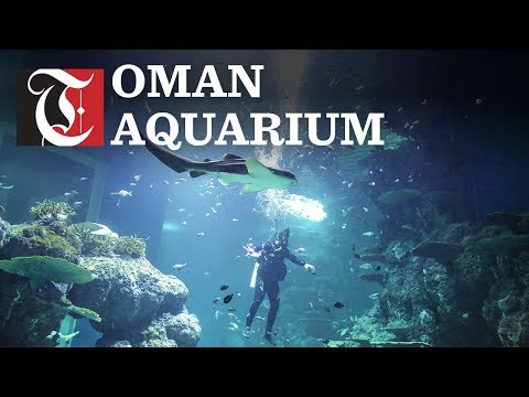 Here's what you can see at the new Oman Aquarium