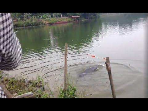 Câu cá trắm đen khủng 38kg đầm Ao Châu-  Fishing a Big Fish