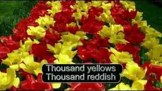 Tulips from Amsterdam English karaoke version