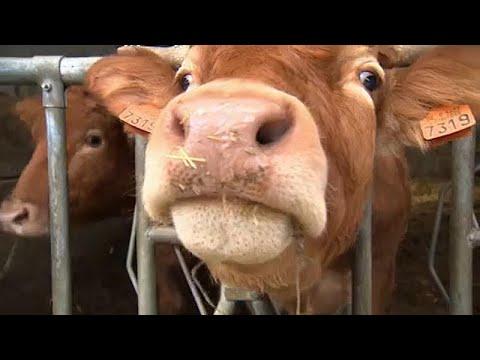 """Το… """"Eurogroup για τα ζώα"""" πιέζει την Κομισιόν"""