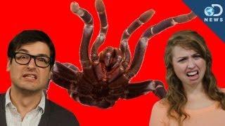 3 Super Weird Animal Behaviors