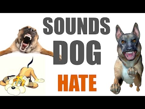 Download 5 Sounds Dogs Hate All Time Hq Video 3GP Mp4 FLV HD Mp3