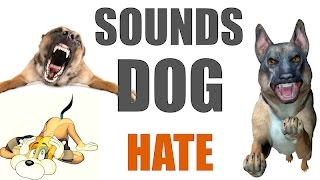 5 Sounds Dogs Hate All Time   HQ