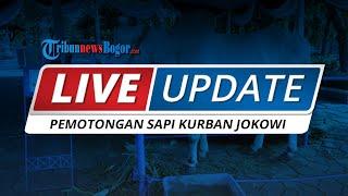 LIVE UPDATE Pemotongan Sapi Kurban Presiden Jokowi di Bogor