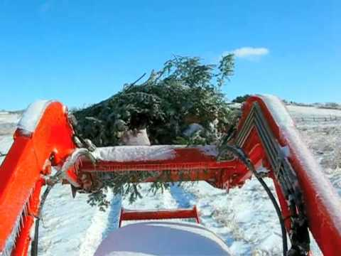 TRACTOR RIDE WITH GARLAND BOUGHS