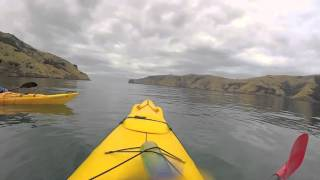 preview picture of video 'Xinroo in NZ   Akaroa Sea Kayak'