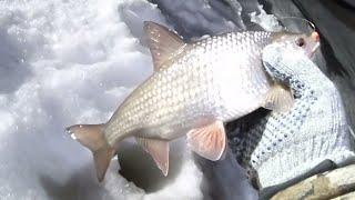 Рыбалка на севере форум 2020 сухое море у изб