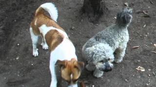 preview picture of video 'Bärchen begrüßt seinen neuen Freund.AVI'