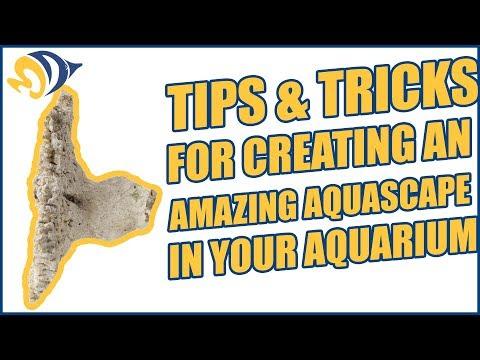 Tips & Tricks for Creating an Amazing Aquascape in your Aquarium