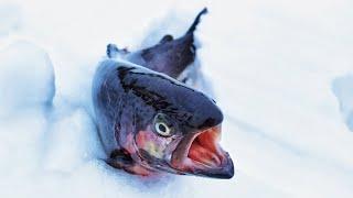 Рыбалка у ашота в масново-жуково вип 2020