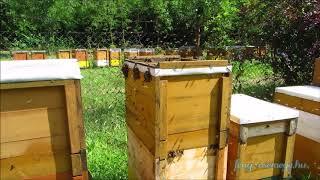 kutatás a méhesben
