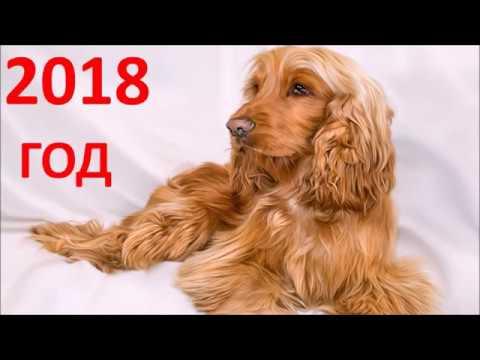 Гороскоп на июнь 2017г для дев