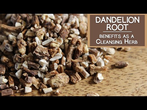 Video Dandelion Root Benefits as a Cleansing Herb