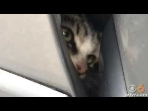 Petersburg auto tech saves kitten stuck in car fender