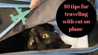10 tips for traveling with cat on a plane by a cat owner   how our cat behaved on plane   WLW