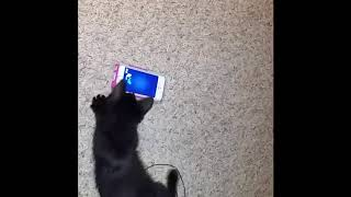 Уморительный котик стоит глянуть | Приколы до слез - Collab #180